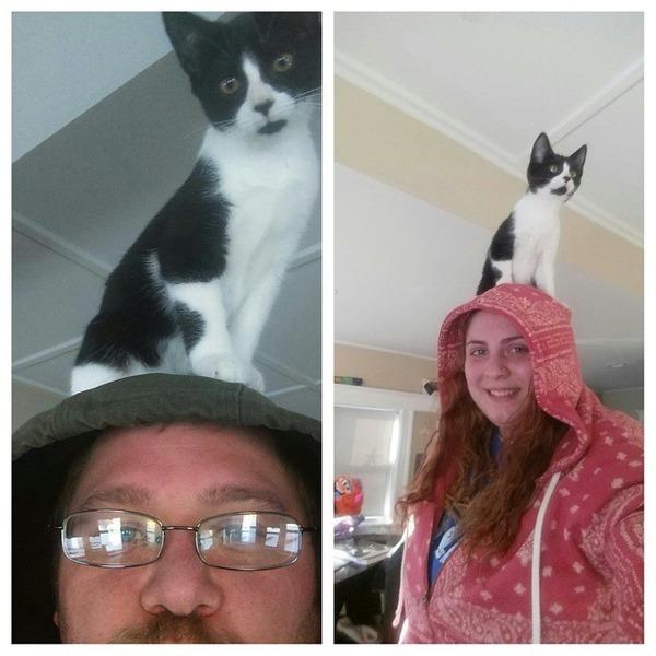 猫帽子 11