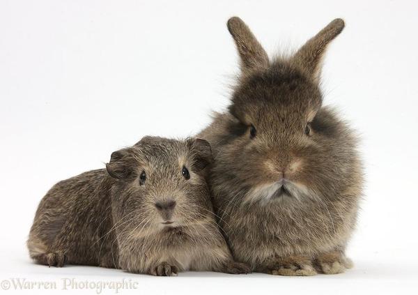 似てる!親が違うのにそっくりな動物画像30枚 (25)