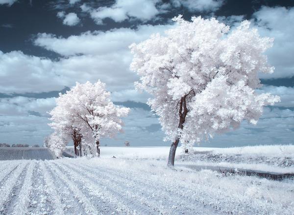 IR(赤外線)カメラで撮影されたポーランドの自然写真が美しい (7)