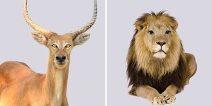 捕食者と獲物の目を交換してみた野生動物のユニークな比較画像