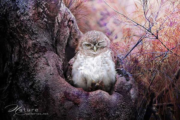 可愛いフクロウの画像 4