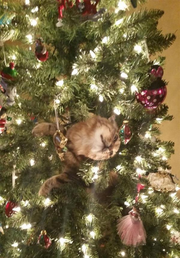 猫、あらぶる!クリスマスツリーに登る猫画像 (21)