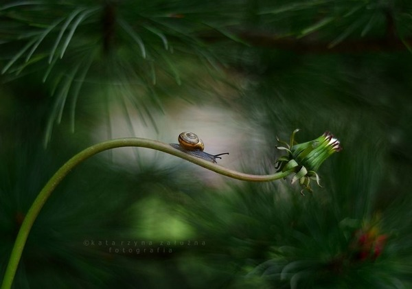 メルヘンチック!カタツムリの小さな世界を激写 (8)