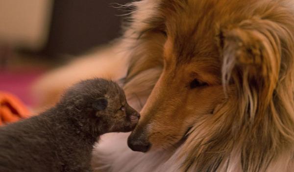 幸いDinozzoを引き取ってくれる家族が見つかった。心優しい犬のコリー Zivaも一緒だ