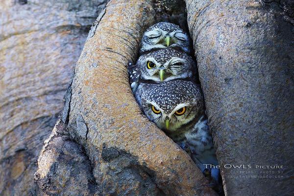 小鳥が温まる為に皆で寄り添っている可愛い画像 (24)