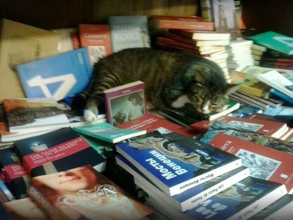 猫の本屋 4