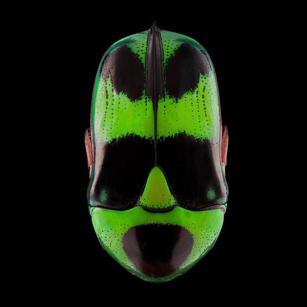 マクロ撮影された昆虫の外観がカラフル美しい (1)