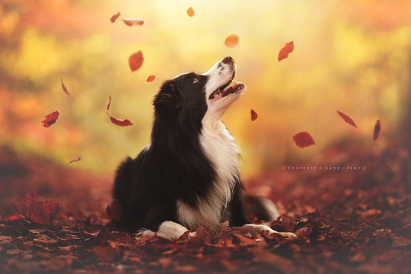 秋が来た!紅葉と遊ぶ犬画像 (1)