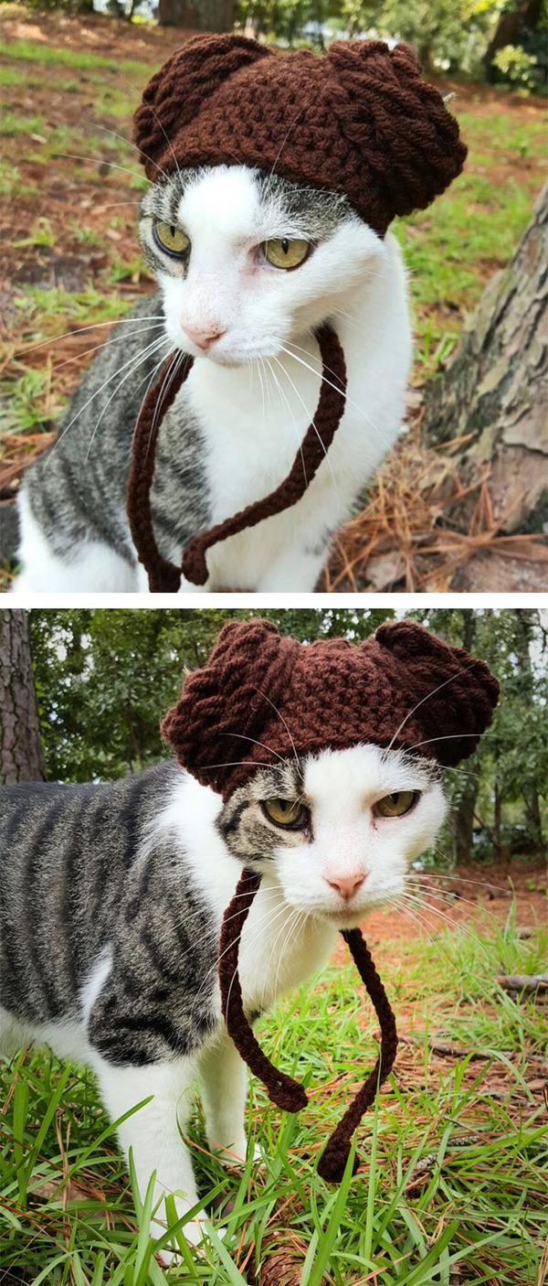 かわいさアップ?猫にぴったりなペット用ニット帽! (1)
