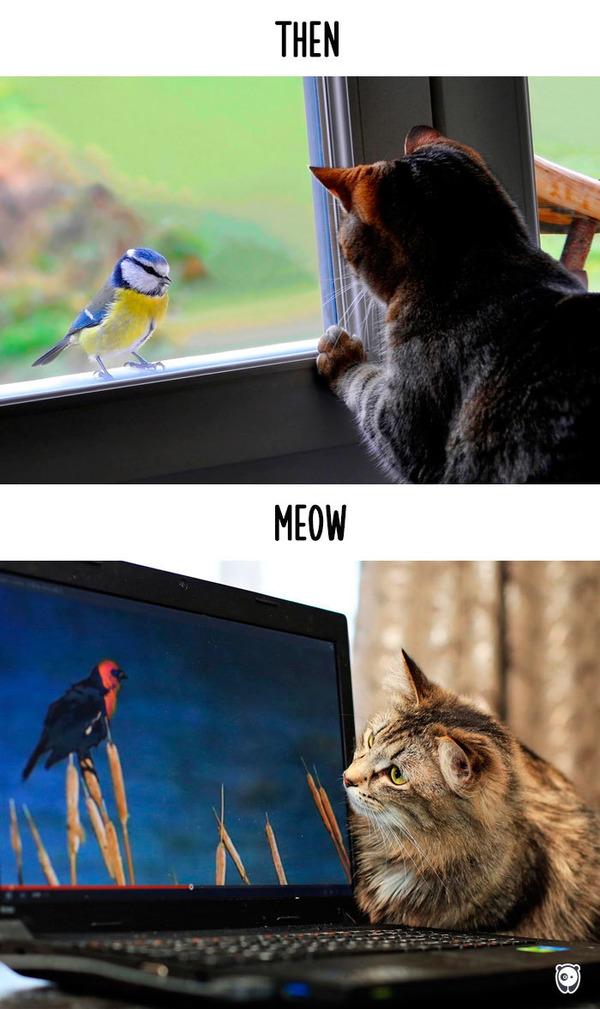 【猫画像】猫の生活を過去と現在で比較! (7)