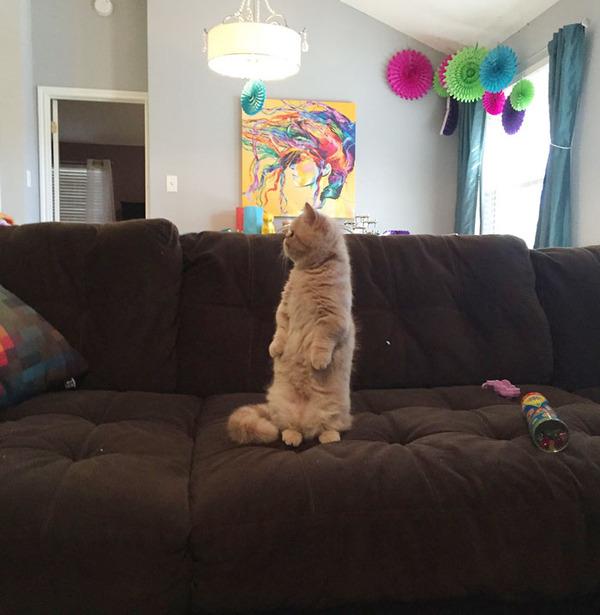 二足で直立する猫 5