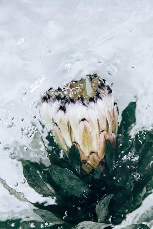 溺れる花の美しさ。花と水と泡の写真シリーズ『flotsam』 (9)
