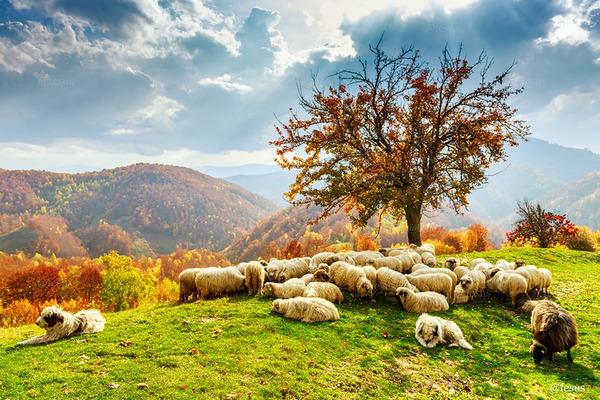 紅葉や秋の森の中を楽しむ動物たちの画像 (20)