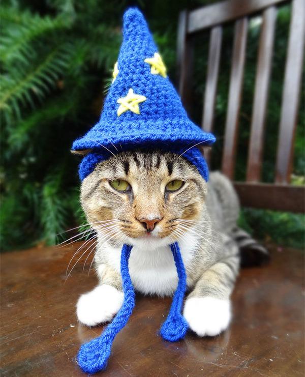 かわいさアップ?猫にぴったりなペット用ニット帽! (3)