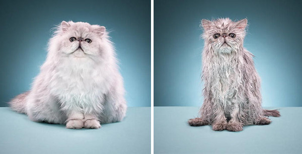 もふもふな動物たちがお風呂で変貌する…!【犬猫画像】 (1)