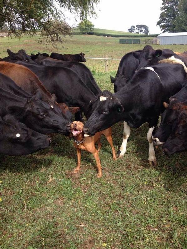 幸せそうな表情を見せる可愛い動物画像