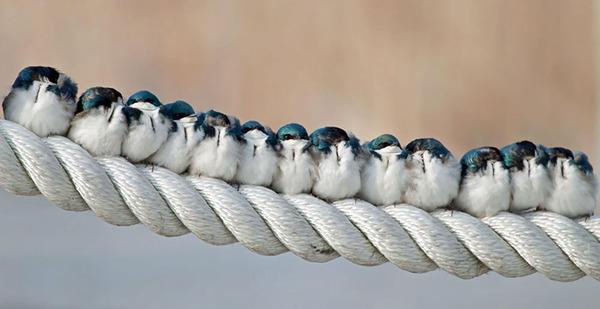 小鳥が温まる為に皆で寄り添っている可愛い画像 (2)