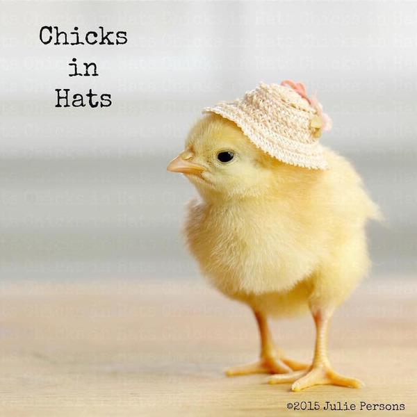 お洒落にきめるぜ!帽子を被ったヒヨコの画像 (2)