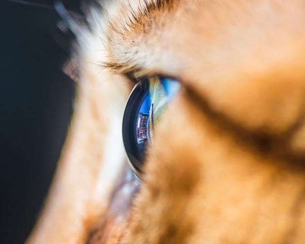 まさにキャッツアイ!綺麗な猫の瞳を撮影した画像16枚 (4)