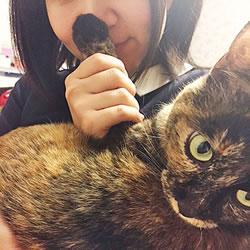 猫部員が猫の肉球の匂いを嗅ぐ