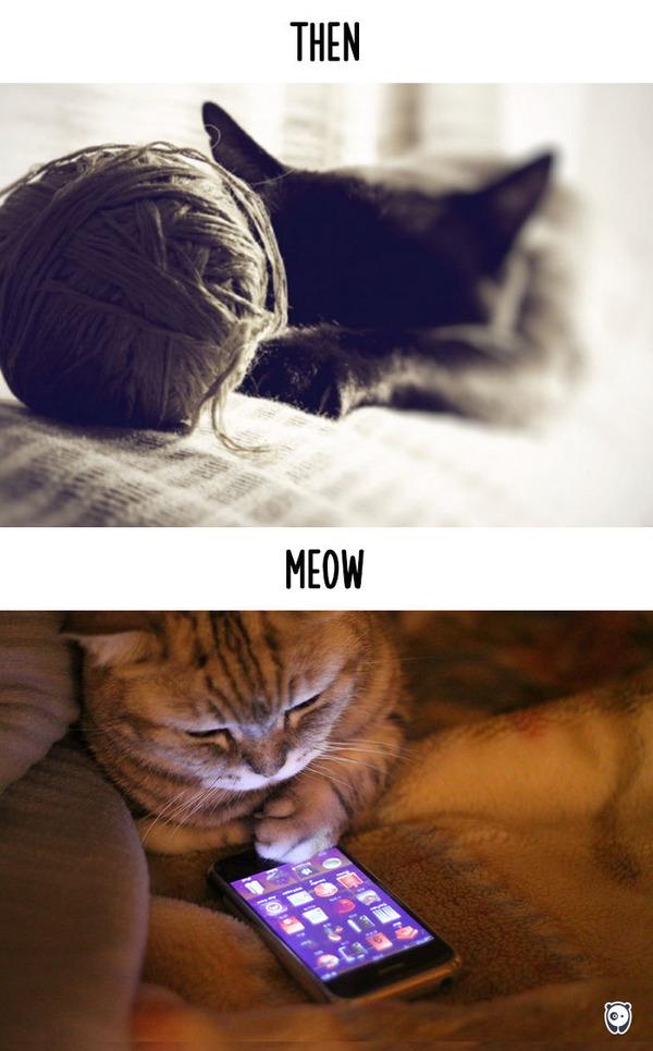 【猫画像】猫の生活を過去と現在で比較! (2)