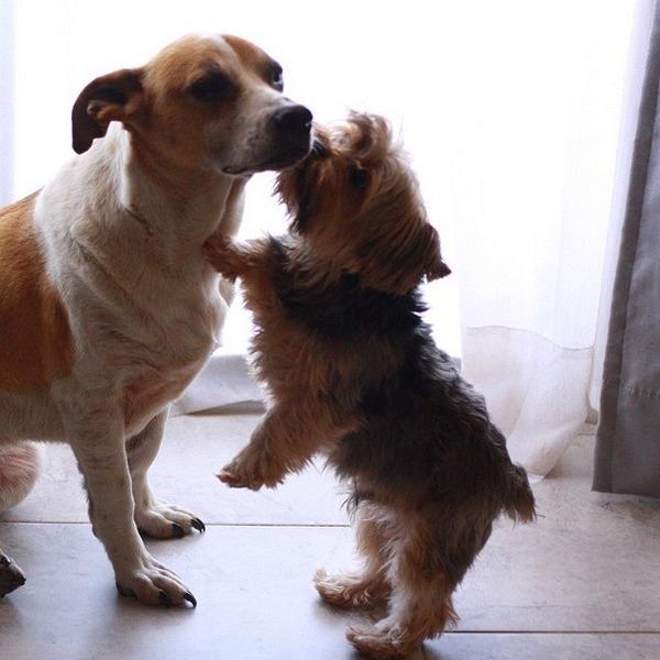 子犬のキス 24