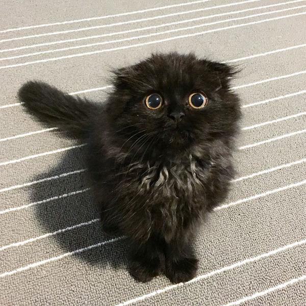 「まっくろくろすけ」みたいな黒猫画像!黒いモフモフ (16)
