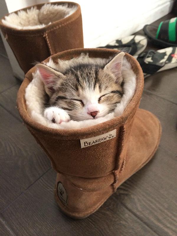 靴の中でお昼寝