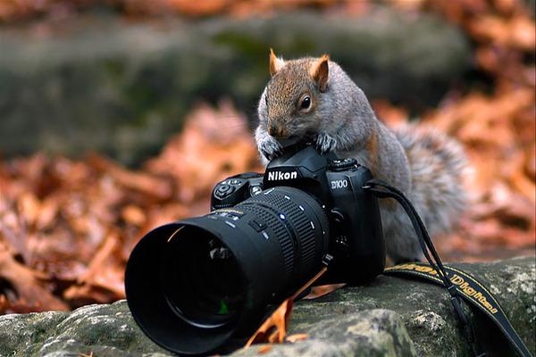 カメラに興味津々な動物の画像 (15)