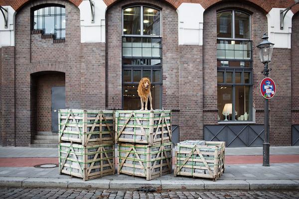 ライオン…の格好をしたわんこが街をさまよい歩く!【犬画像】 (4)