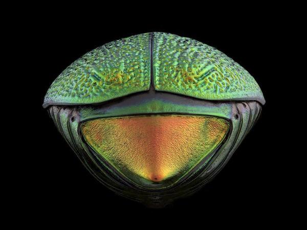 マクロ撮影された昆虫の外観がカラフル美しい (6)