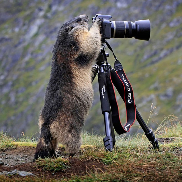 カメラに興味津々な動物の画像 (4)