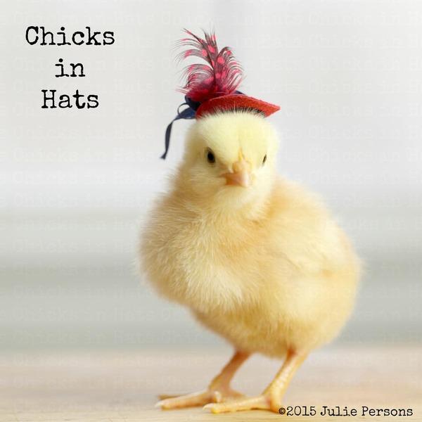 お洒落にきめるぜ!帽子を被ったヒヨコの画像 (16)