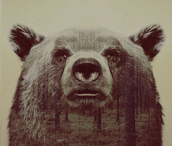 クマの二重露光写真byアンドレアス・リー 3