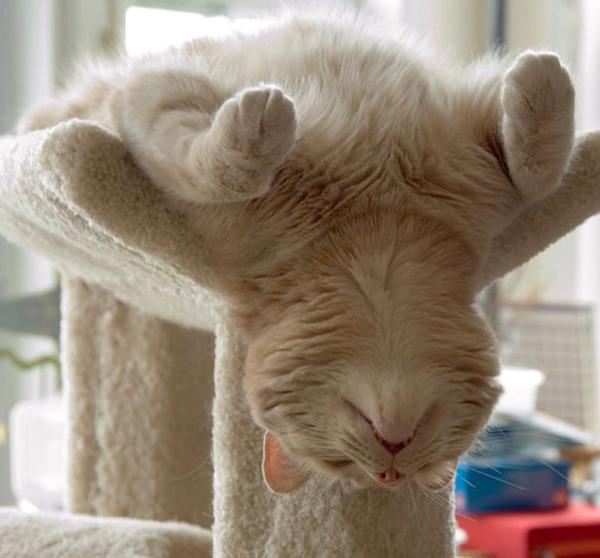寝てるだけなのに…かわいすぎる猫たちの画像 (11)