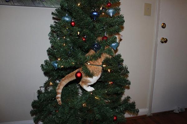 猫、あらぶる!クリスマスツリーに登る猫画像 (8)