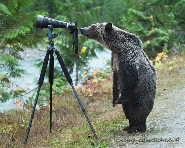 カメラに興味津々な動物の画像 (3)