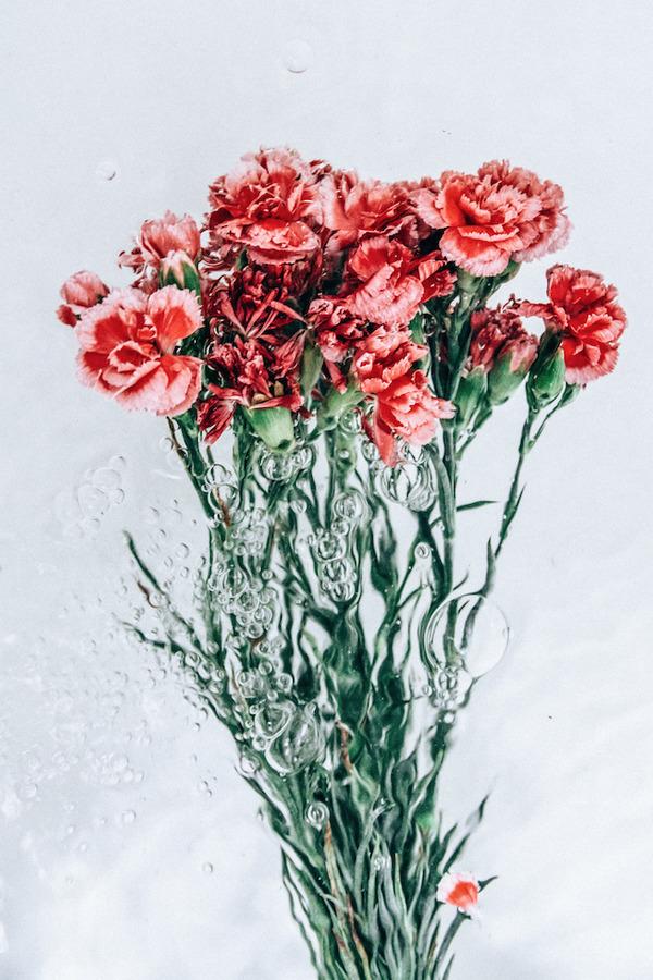 溺れる花の美しさ。花と水と泡の写真シリーズ『flotsam』 (6)
