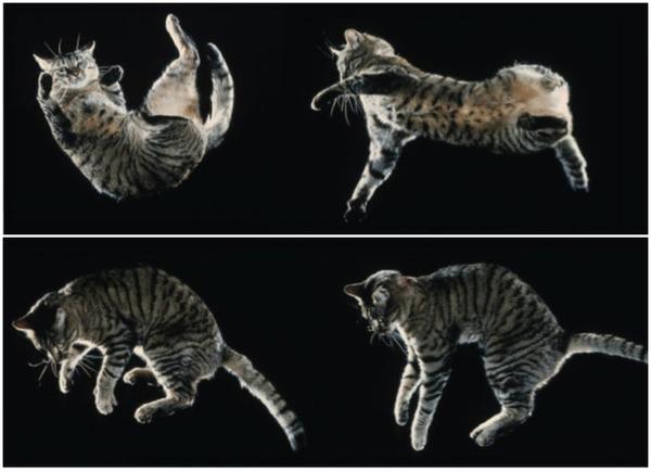 猫は常に自分の足で着地できる