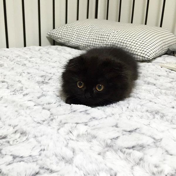 「まっくろくろすけ」みたいな黒猫画像!黒いモフモフ (4)