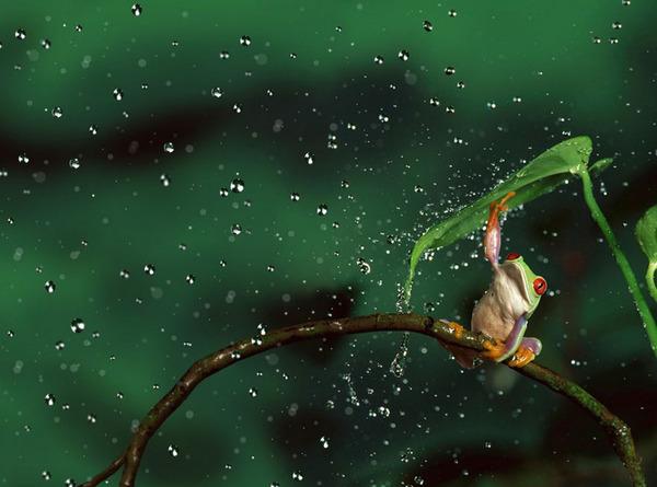 自然の傘を差す動物 16