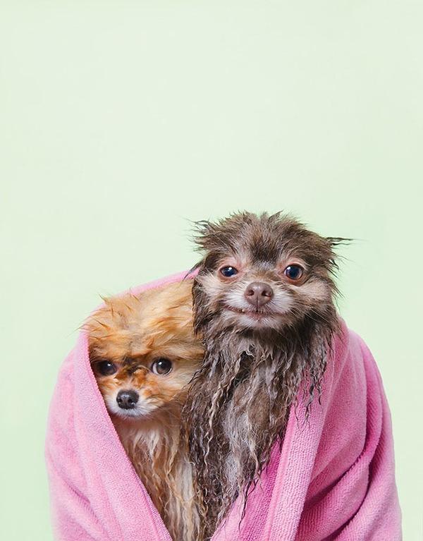 洗い立てだぜ!濡れた犬の写真シリーズ『Wet Dog』 (1)