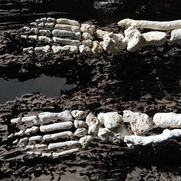 本物みたい。珊瑚の欠片で作る人体の骨格標本 (6)