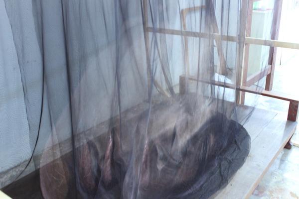 幽霊のように浮かぶ!薄手の生地に描かれた肖像画 (4)
