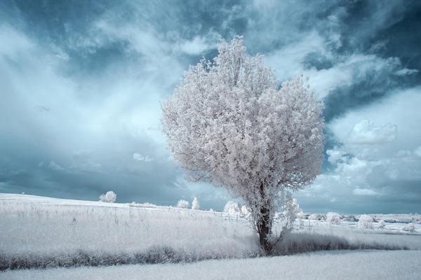 IR(赤外線)カメラで撮影されたポーランドの自然写真が美しい (9)