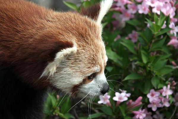 くんくん良い香り。花の匂いを嗅ぐ動物たちの画像 (25)