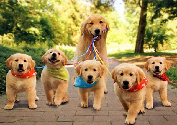 お母さん犬とその子犬達のソックリ集合写真!犬親子画像 (8)