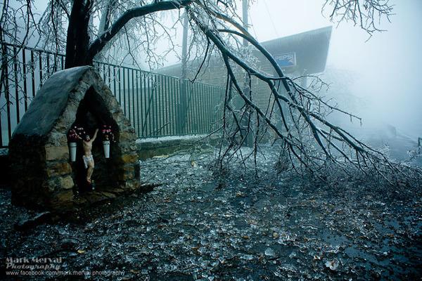 木が倒れる