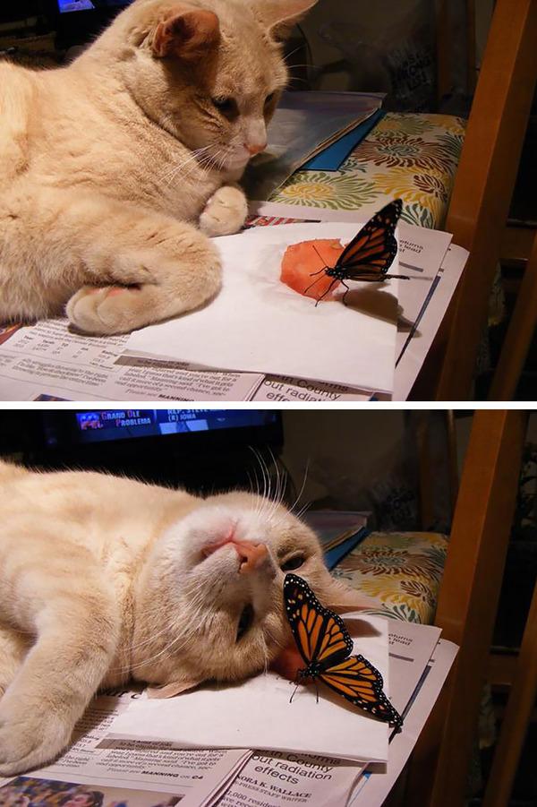 蝶と猫 6