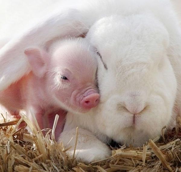ウサギと子豚のお昼寝